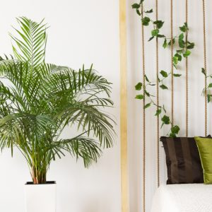 Palmeira-Areca-Bambu_espaco